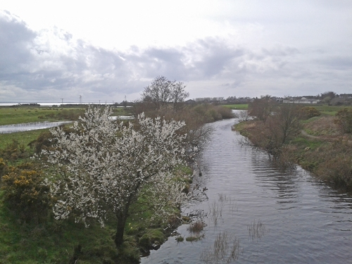 blackthorn at Gretna