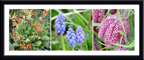primula, hyacinth and fritillary