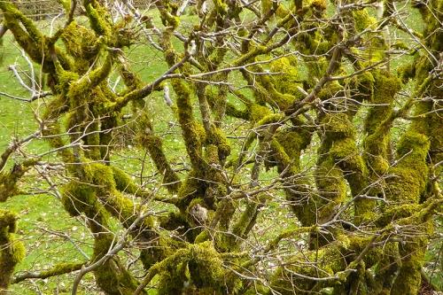 mossy hedge