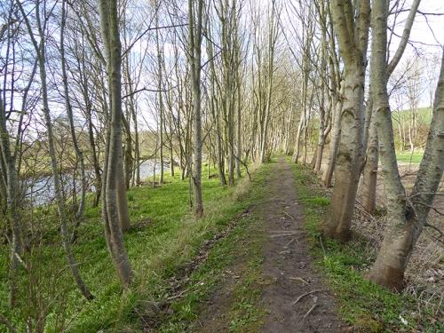 Denholm path