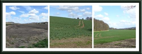 Fields at Denholm