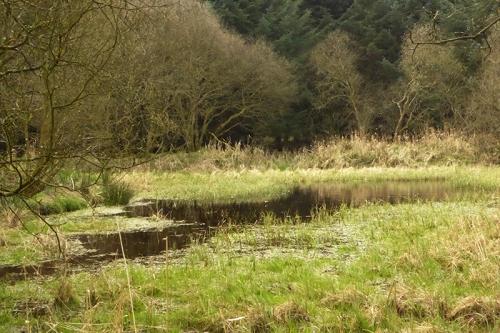 curling pond