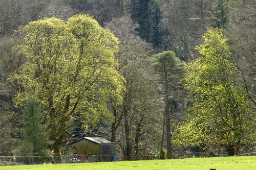 Catleholm trees