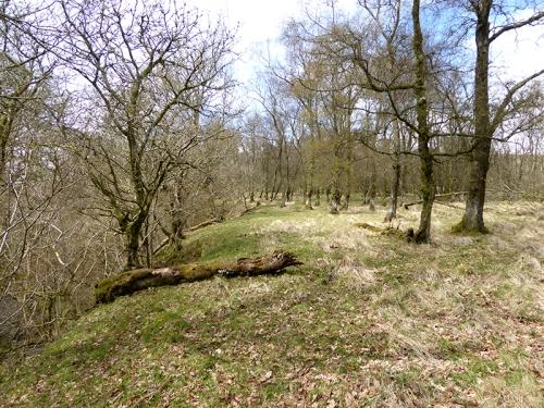 Becks woods