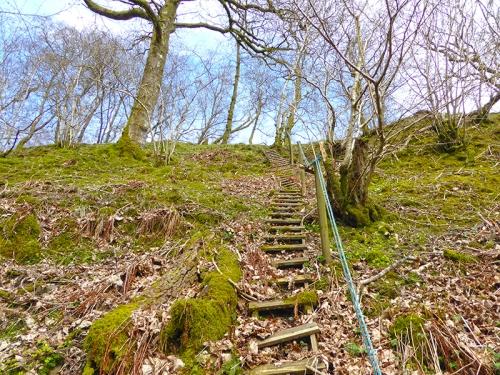 ravine ladder