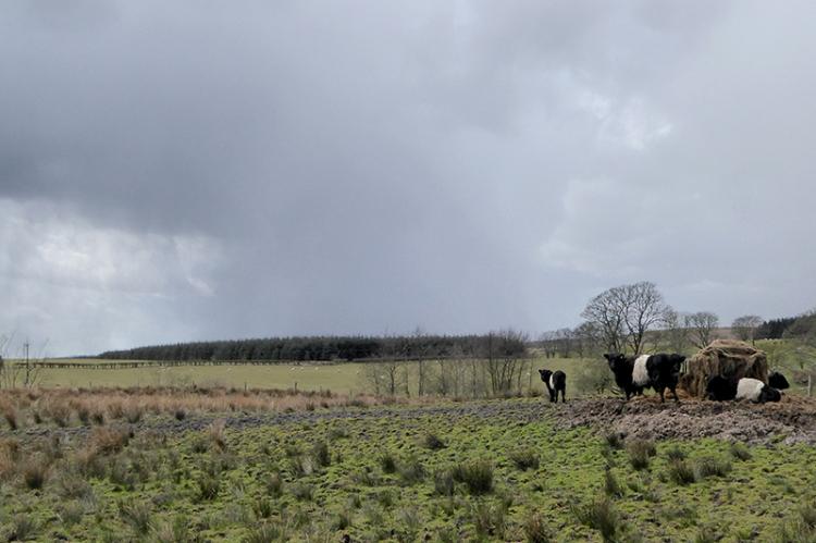 Clouds at Ryehills