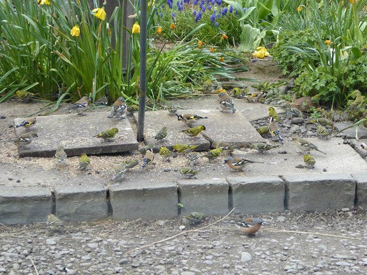 scavenging birds