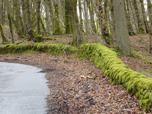 mossy wall Broomholm