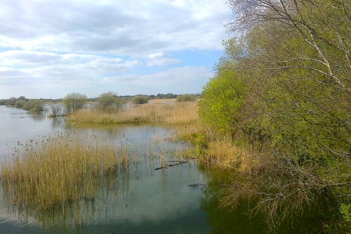 Shapwick Heath Nature Reserve 19.04.16 012