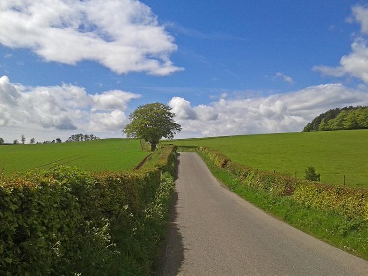 Dalton road