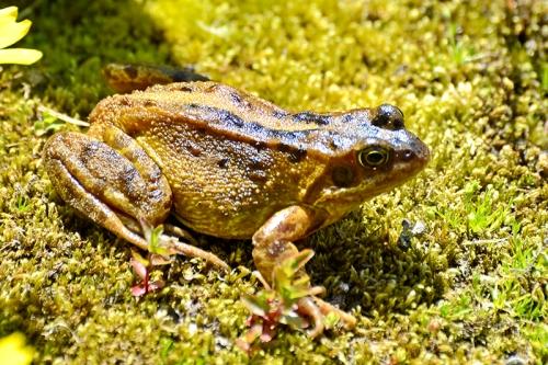 frog in open
