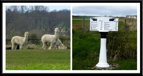 alpaca and signpost