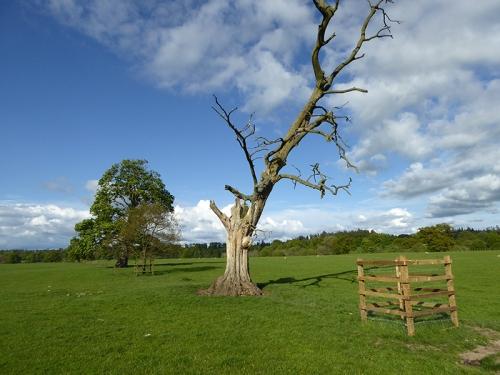 Kirkandrews tree