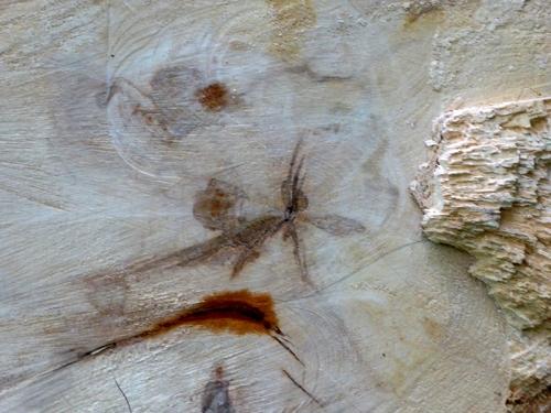sawn tree pattern
