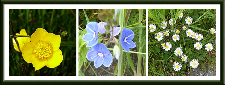a74 wild flowers