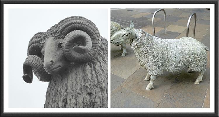 Moffat ram and Lockerbie sheep