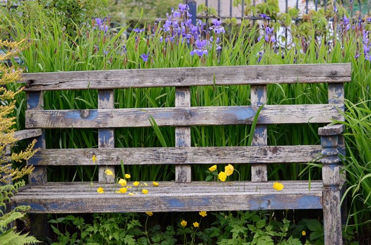 bench with poppies