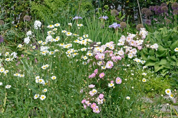 roses daisies iris and rocket