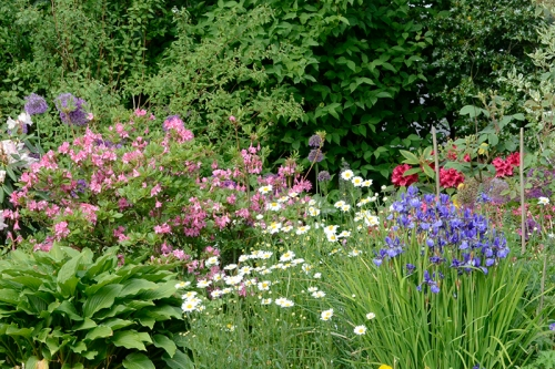 iris, daisies and rhododendrons