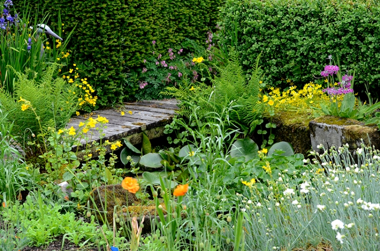 pond in June
