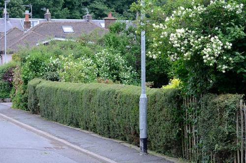 street hedge
