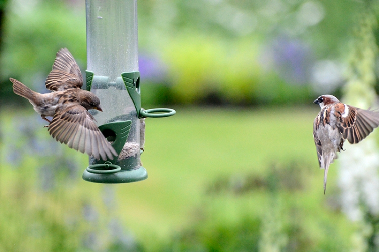 two flying sparrows