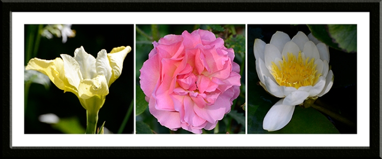 iris, rose and water lily