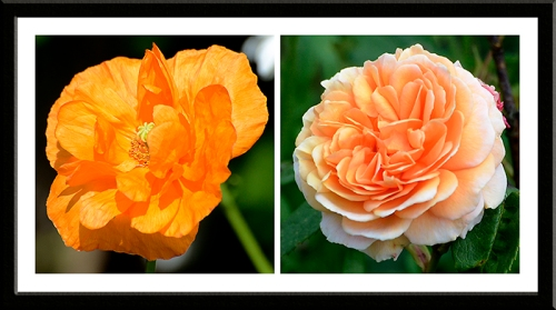 poppy and crown princess margareta
