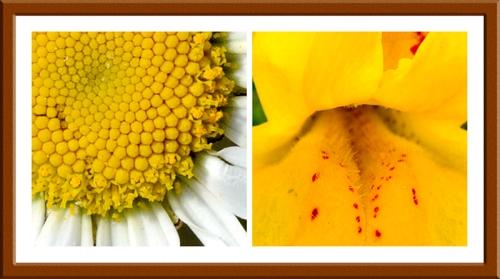 daisy and musk