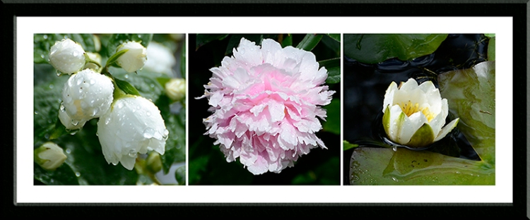 philadelphus, peony and water lily