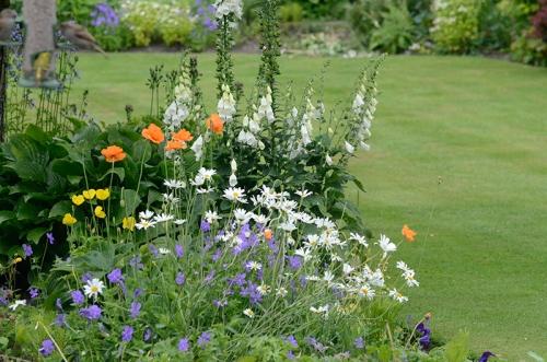 feeder flowers