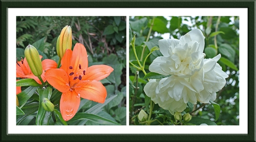 lily and philadelphus