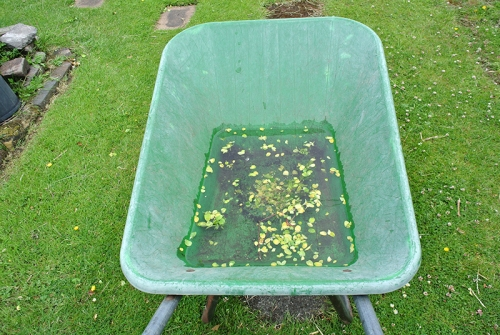 wheelbarrow of rain