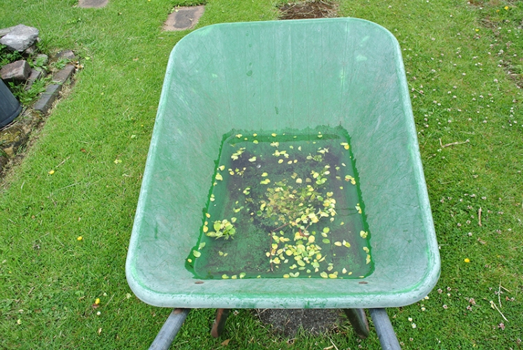 wheelbarrow of rain