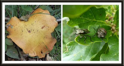 fungus and beetle