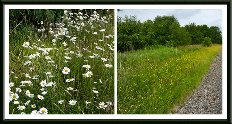 A7 wild flowers