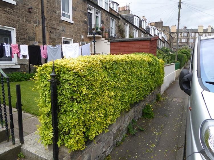 matilda's hedge