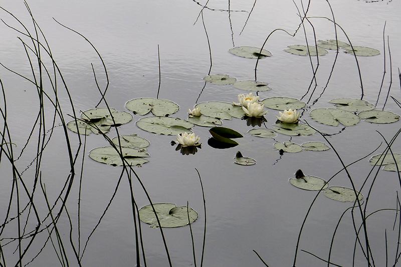 Loch Aigas