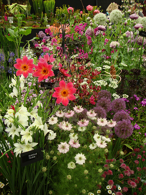 Gardener's World flower show