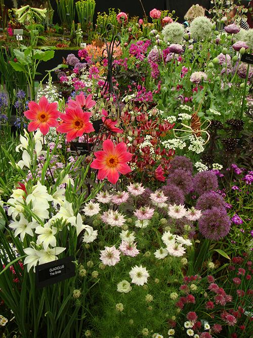 Gardener's World flower show