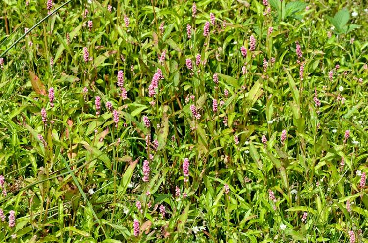 plant on Meikleholm