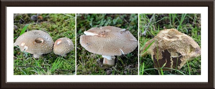 fungi on castleholm