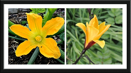 courgette and day lily
