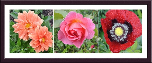 dahlia, rose and poppy