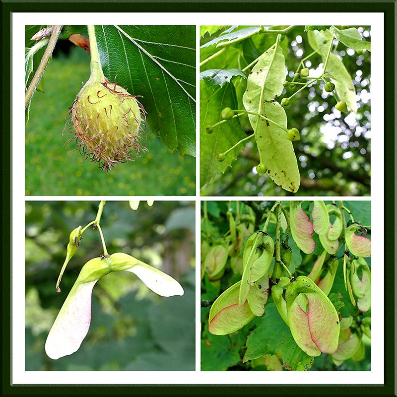 tree fruits