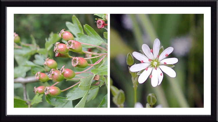 berries and flower