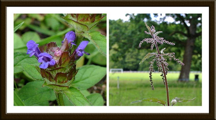 Self heal and a nettle