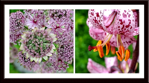 astrantia and martagon lily