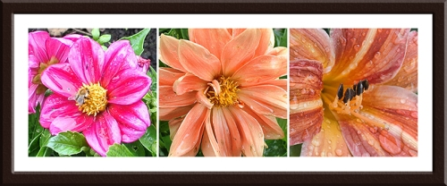 dahlias and lily