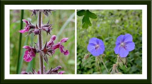 nettle and geranium